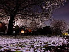 DSCF4975 (masanori_ootaka) Tags: fujifilm x20
