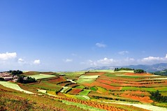 View of fields in Dongchuan, Yuannan (adamba100) Tags: life china street city trip travel light boy portrait people woman mountain plant man color colour cute male men tourism lamp girl beautiful beauty face field grass female children landscape asian person star town canal kid interesting women asia pretty vietnamese cityscape child play view outdoor hill innocent sightseeing chinese decoration beijing lifestyle style charm korea headshot tourist vietnam ridge mongolia korean human thai innocence mountainside lantern gadget grassland pure channel pendant foothill purity mongolian