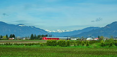 The red barn (peggyhr) Tags: trees houses red white canada mountains green vancouver spring bc barns snowymountains fraservalley lowermainland thegalaxy peggyhr level1photographyforrecreation thegalaxyhalloffame thelooklevel1red super~sixstage2silver rainbowofnaturelevel1red super~sixbronzestage1 dsc03971ab