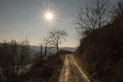 Rheingoldbogen (Netsrak) Tags: trees sky sun tree nature way path natur himmel rhine sonne rhein bume baum rheinland rhineland weg rheinlandpfalz pfad wanderweg rheingoldbogen