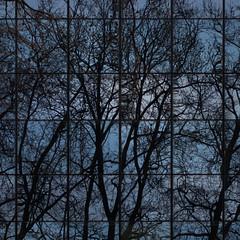 virtual forest (Cosimo Matteini) Tags: trees reflection building london pen olympus m43 mft ep5 virtualforest cosimomatteini mzuiko45mmf18