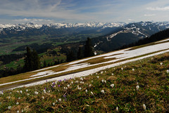 RU_201604_Mittag_002.jpg (boleroplus) Tags: horizontal fleurs germany de bayern neige paysage montagnes parapente immenstadt
