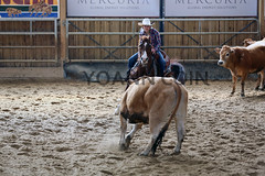 BJ1A5304 (yoann coin) Tags: en horse france western cutting bons equitation ccha chablais ncha charmot