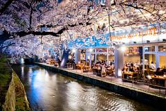 sakura '16 - cherry blossoms #12 (Kiyamachi, Kyoto) (Marser) Tags: flower japan cherry kyoto raw fuji 京都 桜 sakura nightview lightroom kiyamachi 高瀬川 木屋町 xt10