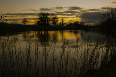 Evening (Adrian Costigan.) Tags: trees ireland sunset sky irish sunlight reflection nature silhouette scenery dusk scenic carton clounds kildare