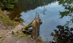 IMG_20160409_154602_DSC_2785-2 (TheGufotography) Tags: lake nature forest germany mummelsee outddor northernblackforest