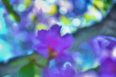 Painting (gnelg) Tags: shadow flower nature blurry cornell ithaca cornelluniversity forcesofnature