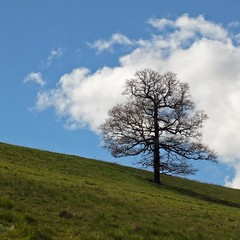 One Tree (Hilary Causer) Tags: tree green clouds rural spring bluesky farmland minimal april hillside slope lonetree onetree