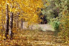 DSC_6026 (Rustam Bikbov) Tags: autumn september 2012    sverdlovskoblast