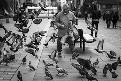 Frenzy (Leanne Boulton) Tags: life street city uk light shadow people urban blackandwhite bw white man black detail male bird texture nature monochrome face birds canon 50mm mono scotland living blackwhite chaos natural feeding humanity bokeh outdoor expression glasgow pigeon candid wildlife pigeons flight culture streetphotography streetlife scene depthoffield human shade 7d posture gesture society tone facial bif frenzy commotion candidstreetphotography