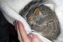 Cute Squirrel (Hedi-Alana) Tags: boy baby cute nature animal yard squirrel adorable