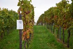 Pfalz (Uwe Brandt) Tags: natur landschaft pfalz weinberg weingut ludwigshhe