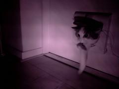20160429-010950-i-1 (Catflap central) Tags: camera pet cats cat pi raspberry meow catdoor catflap kattenluik katzenklappe catflapj2nnl