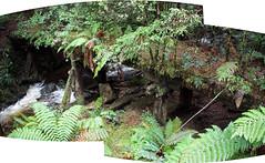 North East Dundas Tramway (cymro76) Tags: waterfall australia tasmania narrowgauge montezumafalls trestlebridge beyergarratt 2ftgauge northeastdundastramway