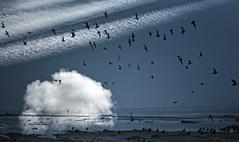 The Poetry of Survival (landsendula (patchy presence)) Tags: sea reflections silhouettes multipleexposure birdsinflight oystercatchers deepblue nikond300 7002000mmf28 natanzach illuminatedcloud poetryofsurvivalpostwarpoetsofcentralandeasterneurope