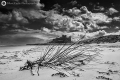 Castle Bamburgh, Northumberland (Silent Eagle  Photography) Tags: sea sky bw plants seascape castle beach monochrome clouds canon photography yahoo google silent eagle outdoor northumberland sep northeast bamburgh bamburghcastle canoneos5dmarkiii silenteaglephotography silenteagle09