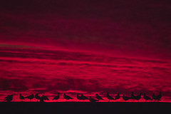 (. . .) Tags: chile sunset red sky texture birds clouds atardecer rojo shadows purple pajaros cielo nubes 2016