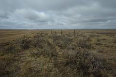 SART032516 (RhinoSkin) Tags: road fence landscape brush sage dirt trail alberta prairie