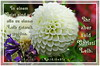 Christi Leib / body of Christ (Martin Volpert) Tags: flower fleur christ flor pflanze bible blomma christianity blume fiore blüte bibel blomster virág lore biblia bloem blóm çiçek floro kwiat flos ciuri glaube bijbel kvet kukka cvijet flouer glauben christentum bláth jesuschristus cvet zieds õis floare תנך blome žiedas bibelverskarte mavo43