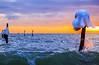 Dancing Queen (Threin Ottossen) Tags: winter sunset sea seascape ice beach water landscape denmark outdoor shore lolland weatherphotography abigfave fishingstakes maglehoej