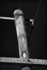 Bird Free (brev99) Tags: wood blackandwhite powerlines wires poles electrical topazdenoise topazdetail analogefexpro2