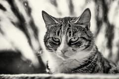 Minka (unbunt.me) Tags: cat blackwhite katze fujixt1