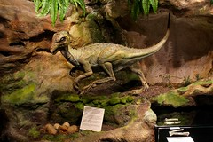 Fulgurotherium Diorama (Piedmont Fossil) Tags: museum dinosaur sydney australia collection national opal
