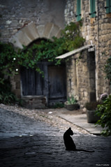 Errance (Philippe Gillotte) Tags: black composition cat alley feline chat noir path ruelle wandering chemin flin errance