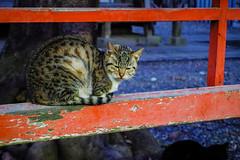 Today's Cat@2016-02-02 (masatsu) Tags: cat pentax cc100 catspotting mx1 thebiggestgroupwithonlycats