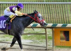 2015-12-31 (14) r3 J.D. Acosta on #10 Skip the Punch (JLeeFleenor) Tags: horses caballo cheval photography bay md photos uma maryland cal jockey jinete cavallo cavalo pferd equestrian kuda alogo equine hest thoroughbreds soos hevonen cuddy paard cavall kon koin laurelpark  jokey fantino hst ceffyl  jquei  ko faras hestur  perd ngi  konj    capall beygir yarraman dokej rennreiter  pfeerd jdacosta marylandhorseracing marylandracing   okej kilparatsastaja jocheu