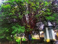fruitful places (Rodrigo Alceu Dispor) Tags: tree place fx fruitful