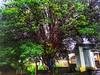 fruitful places (Rodrigo Alceu Baliza) Tags: tree place fx fruitful