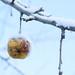 Snowy apple