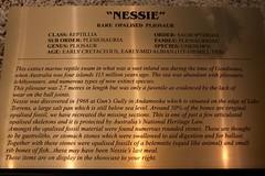 """Nessie"" - Rare Opalised Pliosaur (Piedmont Fossil) Tags: museum text sydney australia collection national opal"