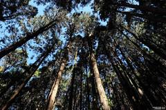 (lscott200) Tags: life travel trees nature forest landscapes spring taiwan  fujifilm    nantou  2016   xt1 xf14mmf14rwr