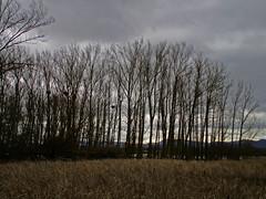 Da muy ventoso con cielo cubierto (eitb.eus) Tags: jose g1 vitoriagasteiz 32073 eitbcom tiemponaturaleza antoniofernandezdeluco tiempon2016 salburua922016