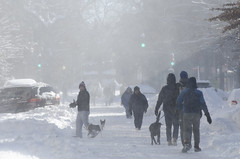 Gusting (Tim Brown's Pictures) Tags: winter pets snow dogs washingtondc blizzard timbrown january2016 blizzard2016