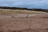 Shifting Sands,Sands of St Cyrus,St Cyrus National Nature Reserve_jan 16_677 (Alan Longmuir.) Tags: aberdeenshire grampian blowingsand stcyrus shiftingsands sandsofstcyrus stcyrusnationalnaturereserve