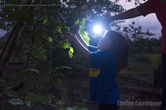 Catharina (Stefan Lambauer) Tags: brazil baby nature field brasil night kid br interior sopaulo campo noite flashlight lanterna catharina 2016 goiaba plantao colhendo pedrodetoledo stefanlambauer