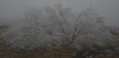 Droc givr (Michel Seguret Thanks all for 8.600 000 views) Tags: winter france cold ice nature hiver natur natura pro invierno kalt inverno froid frio givre lozere aubrac gevaudan michelseguret