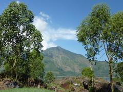 Gunung Abang auf dem Rand der Caldera des Batur; Bali, Indonesien (3) (Chironius) Tags: trees bali tree indonesia rboles boom arbres rbol albero bume arbre rvore baum trd indonesien batur aa