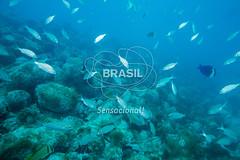 NE_Abrolhos0043 (Visit Brasil) Tags: horizontal brasil fauna natureza bahia nordeste detalhe externa abrolhos semgente subaqutica diurna