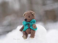 snow fortress (-Natalis-) Tags: bear snow teddy teddybear   beachminiature