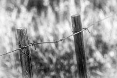 Dancing Light (Daniela 59) Tags: wood light monochrome grass fence wire post bokeh fencepost woodenpost fencefriday danielaruppel reitgemeinschaftkleinwindhoek fenceinthebush