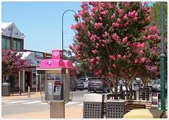 Pakenham in the pink! (fotograf1v2) Tags: street summer flora australia victoria streetscape shoppingprecinct pakenham floweringtrees streettrees telstraphonebooth crepemyrtletrees cardiniashire