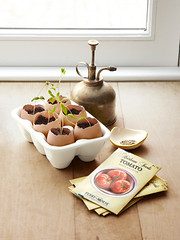 Eggshell Seedlings (Heath & the B.L.T. boys) Tags: egg eggcarton gardening diy spring