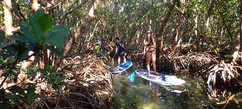 2_17_16 Kayak Paddleboard Tour Sarasota FL 12