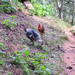"Birds on the Trail <a style=""margin-left:10px; font-size:0.8em;"" href=""http://www.flickr.com/photos/14315427@N00/25151626796/"" target=""_blank"">@flickr</a>"