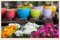 Freitag ist Blmchentag ( eulenbilder - berti ) Tags: blumen bunt frhlingsblumen blumenschmuck gartencenter farbenpracht freitagsblmchen