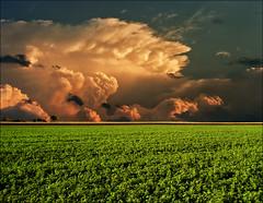Clover field at sunset (Katarina 2353) Tags: sunset summer nature field landscape nikon serbia clover srbija photopainting katarinastefanovic katarina2353